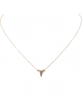 Shark Tooth Delicate Necklace